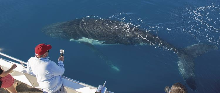 A whale swims past a whale watching boat as the passengers photograph the action